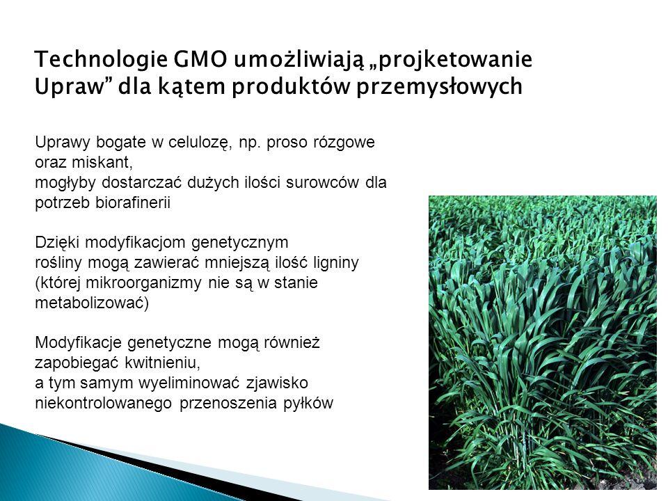 Technologie GMO umożliwiają projketowanie Upraw dla kątem produktów przemysłowych Uprawy bogate w celulozę, np. proso rózgowe oraz miskant, mogłyby do