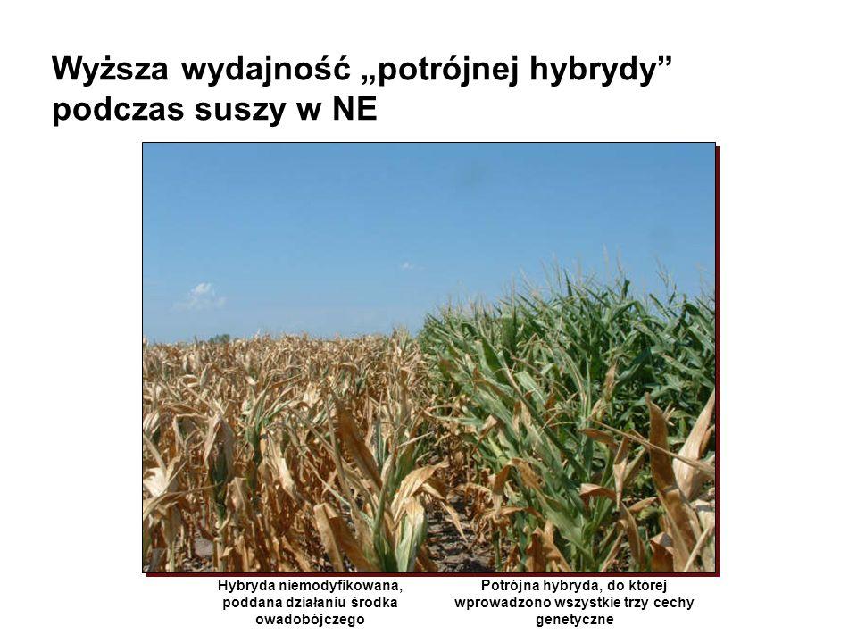 Opcje rozmieszczenia obszaru bezpieczeństwa Pole kukurydzy BtObszar bezpieczeństwa wolny od BtSoja
