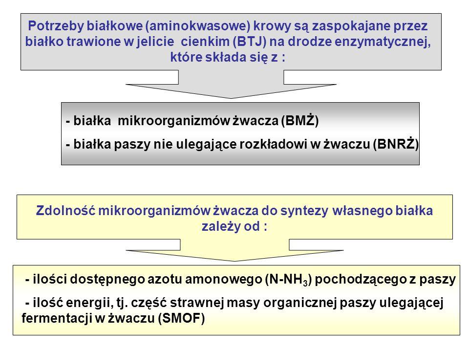 Potrzeby białkowe (aminokwasowe) krowy są zaspokajane przez białko trawione w jelicie cienkim (BTJ) na drodze enzymatycznej, które składa się z : - białka mikroorganizmów żwacza (BMŻ) - białka paszy nie ulegające rozkładowi w żwaczu (BNRŻ) Zdolność mikroorganizmów żwacza do syntezy własnego białka zależy od : - ilości dostępnego azotu amonowego (N-NH 3 ) pochodzącego z paszy - ilość energii, tj.