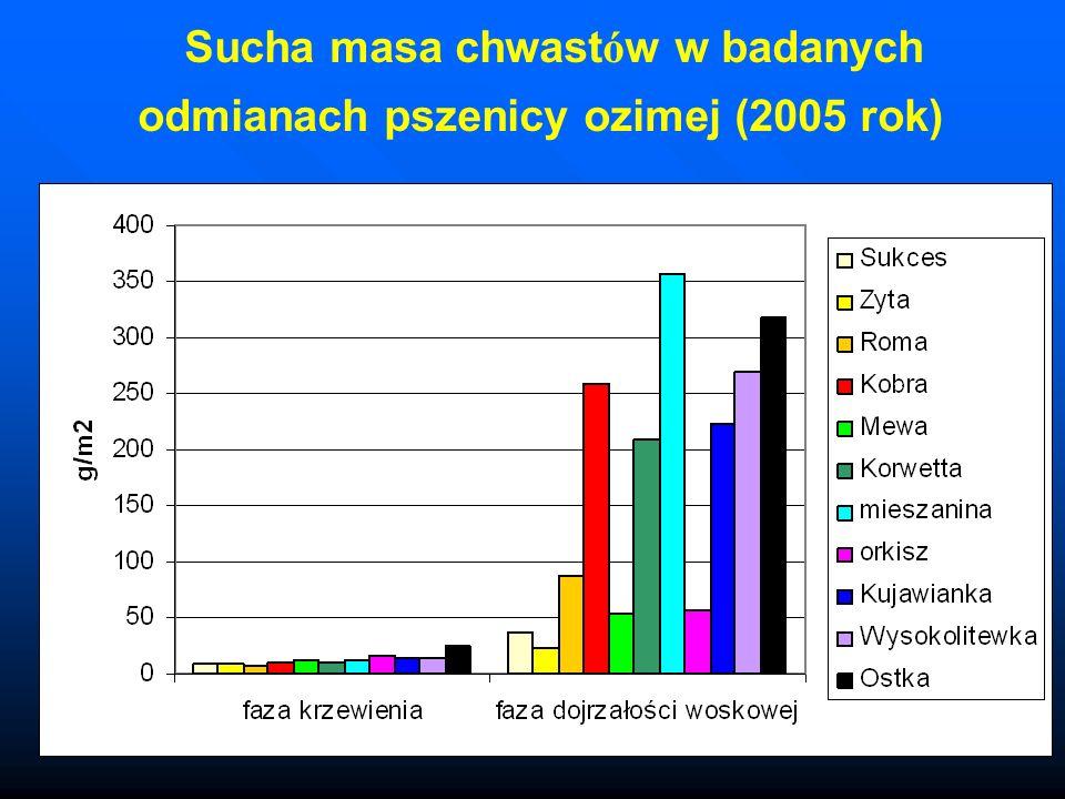 Sucha masa chwast ó w w badanych odmianach pszenicy ozimej (2005 rok)
