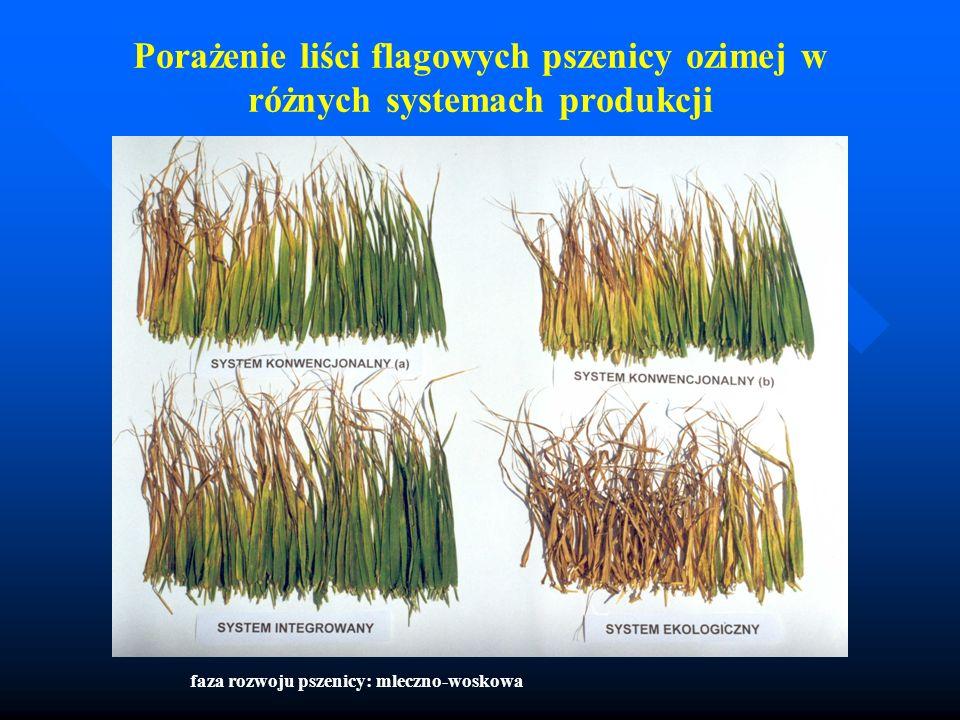 Porażenie liści flagowych pszenicy ozimej w różnych systemach produkcji faza rozwoju pszenicy: mleczno-woskowa