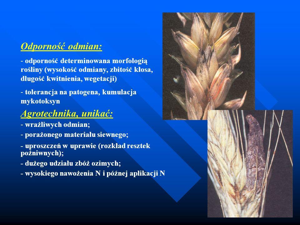 Odporność odmian: - odporność determinowana morfologią rośliny (wysokość odmiany, zbitość kłosa, długość kwitnienia, wegetacji) - tolerancja na patoge
