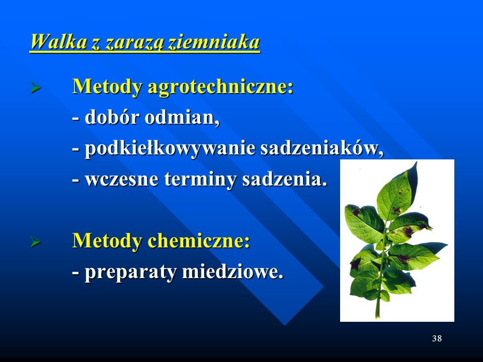 38 Walka z zarazą ziemniaka Metody agrotechniczne: Metody agrotechniczne: - dobór odmian, - podkiełkowywanie sadzeniaków, - wczesne terminy sadzenia.