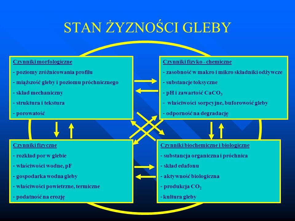 STAN ŻYZNOŚCI GLEBY Czynniki morfologiczne - poziomy zróżnicowania profilu - miąższość gleby i poziomu próchnicznego - skład mechaniczny - struktura i