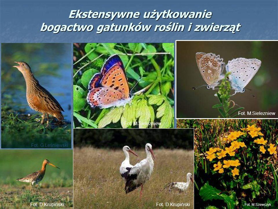 Ekstensywne użytkowanie bogactwo gatunków roślin i zwierząt Fot. M.Szewczyk Fot. D.Krupiński Fot. M.Sielezniew Fot. D.Krupiński Fot. G.Leśniewski