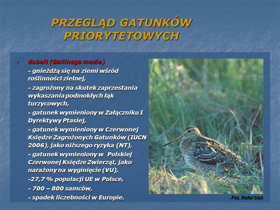 PRZEGLĄD GATUNKÓW PRIORYTETOWYCH dubelt (Gallinago media) dubelt (Gallinago media) - gnieżdżą się na ziemi wśród roślinności zielnej, - zagrożony na s