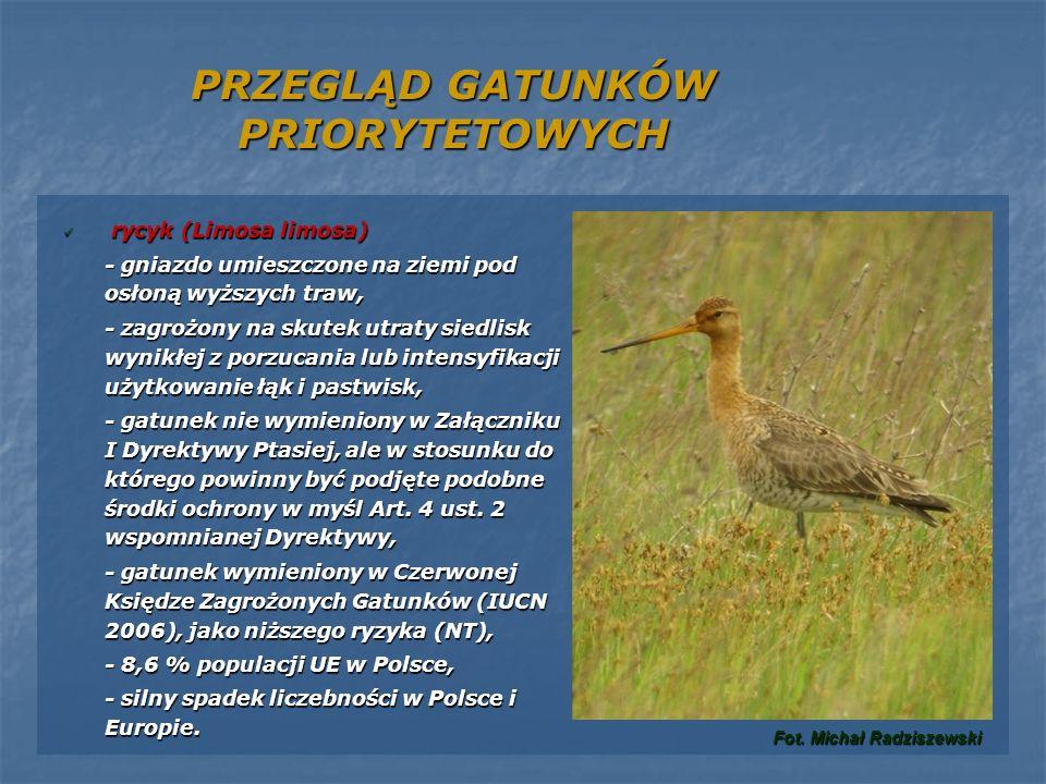 PRZEGLĄD GATUNKÓW PRIORYTETOWYCH rycyk (Limosa limosa) rycyk (Limosa limosa) - gniazdo umieszczone na ziemi pod osłoną wyższych traw, - zagrożony na s