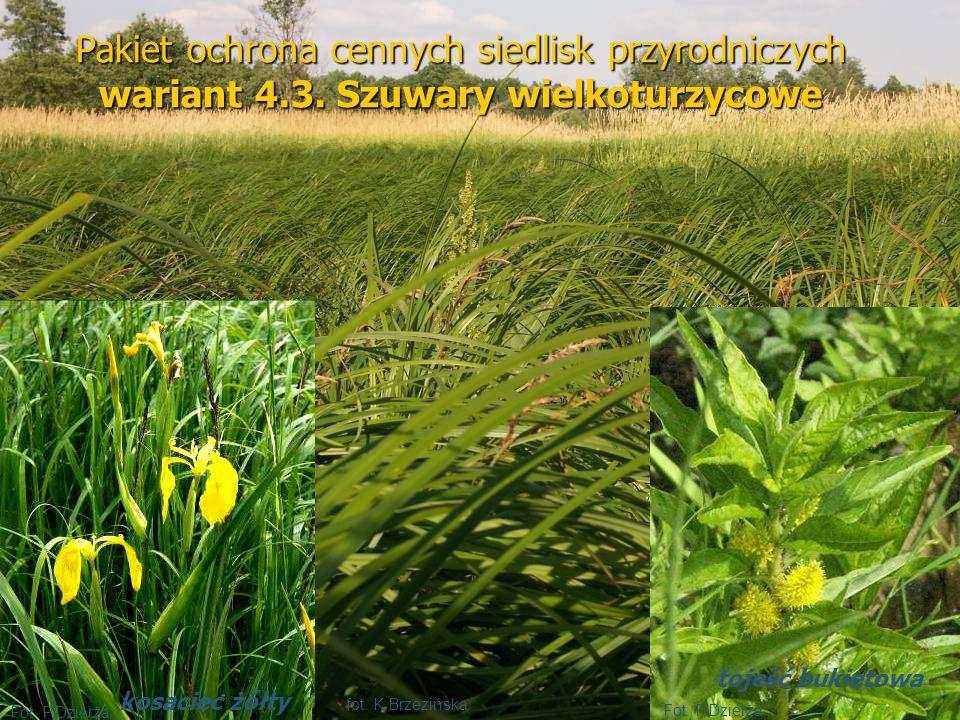 Pakiet ochrona cennych siedlisk przyrodniczych wariant 4.3. Szuwary wielkoturzycowe Fot. P.Dzierża kosaciec żółty tojeść bukietowa fot. K.Brzezińska