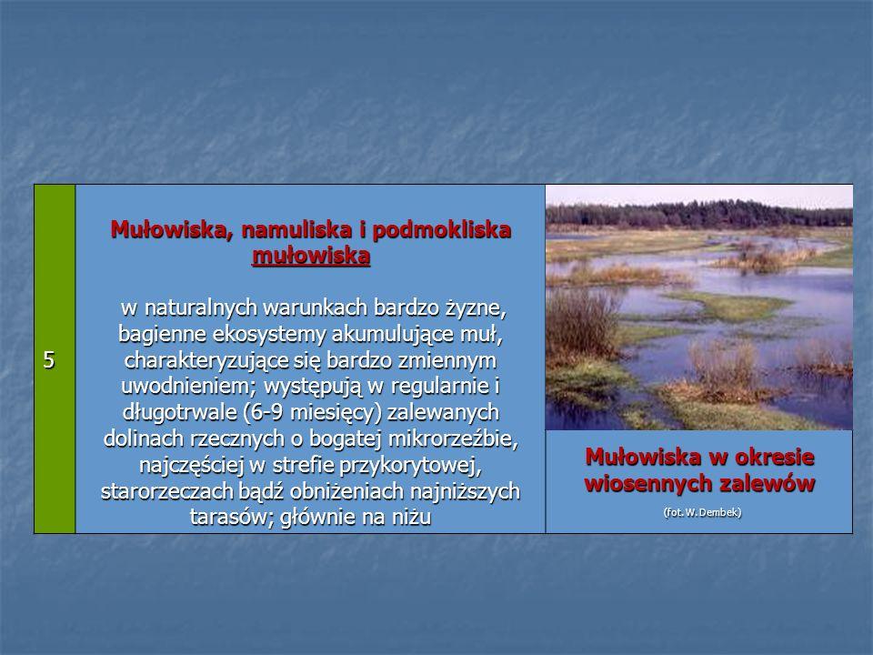 5 Mułowiska, namuliska i podmokliska mułowiska w naturalnych warunkach bardzo żyzne, bagienne ekosystemy akumulujące muł, charakteryzujące się bardzo