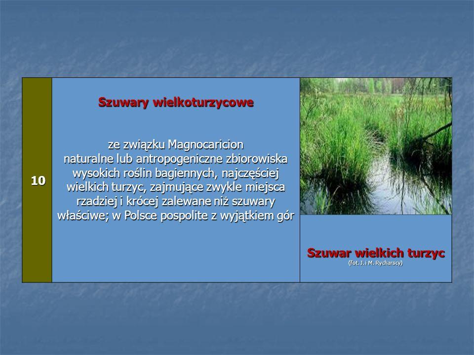 10 10 Szuwary wielkoturzycowe ze związku Magnocaricion naturalne lub antropogeniczne zbiorowiska wysokich roślin bagiennych, najczęściej wielkich turz