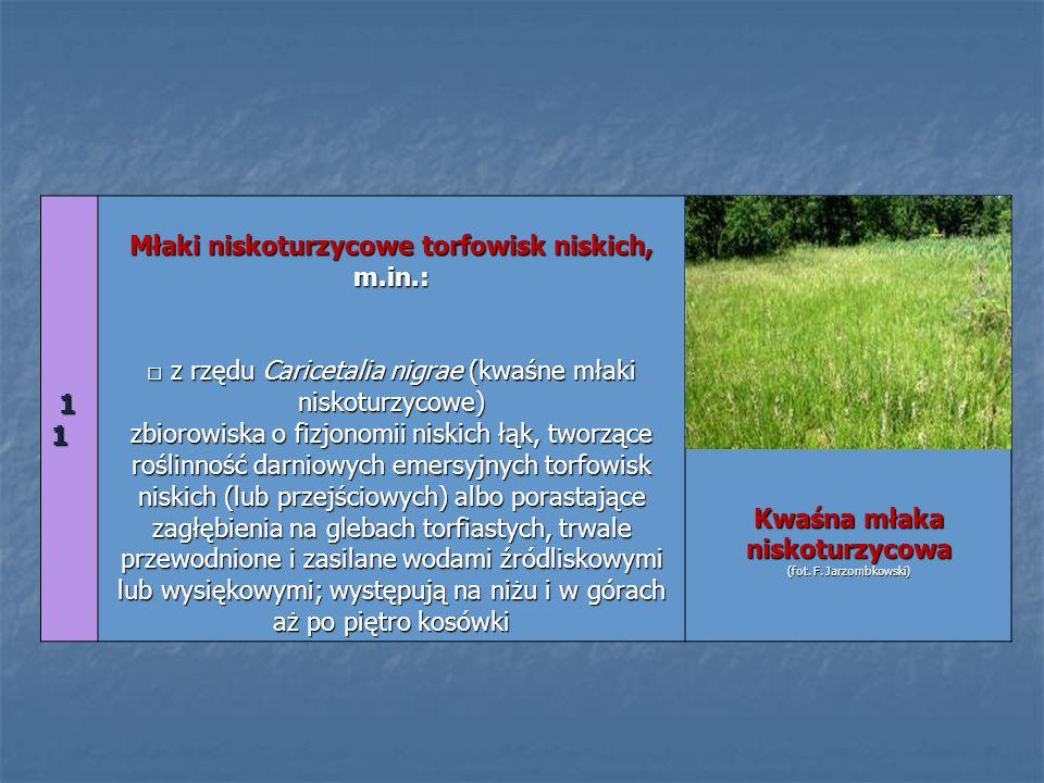 11 11 11 11 Młaki niskoturzycowe torfowisk niskich, m.in.: z rzędu Caricetalia nigrae (kwaśne młaki niskoturzycowe) zbiorowiska o fizjonomii niskich ł