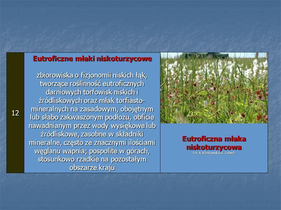 12 Eutroficzne młaki niskoturzycowe zbiorowiska o fizjonomii niskich łąk, tworzące roślinność eutroficznych darniowych torfowisk niskich i źródliskowy