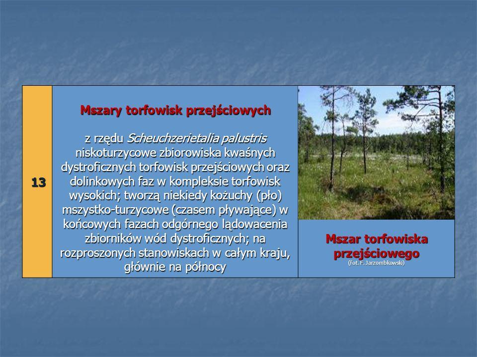 13 13 Mszary torfowisk przejściowych z rzędu Scheuchzerietalia palustris niskoturzycowe zbiorowiska kwaśnych dystroficznych torfowisk przejściowych or
