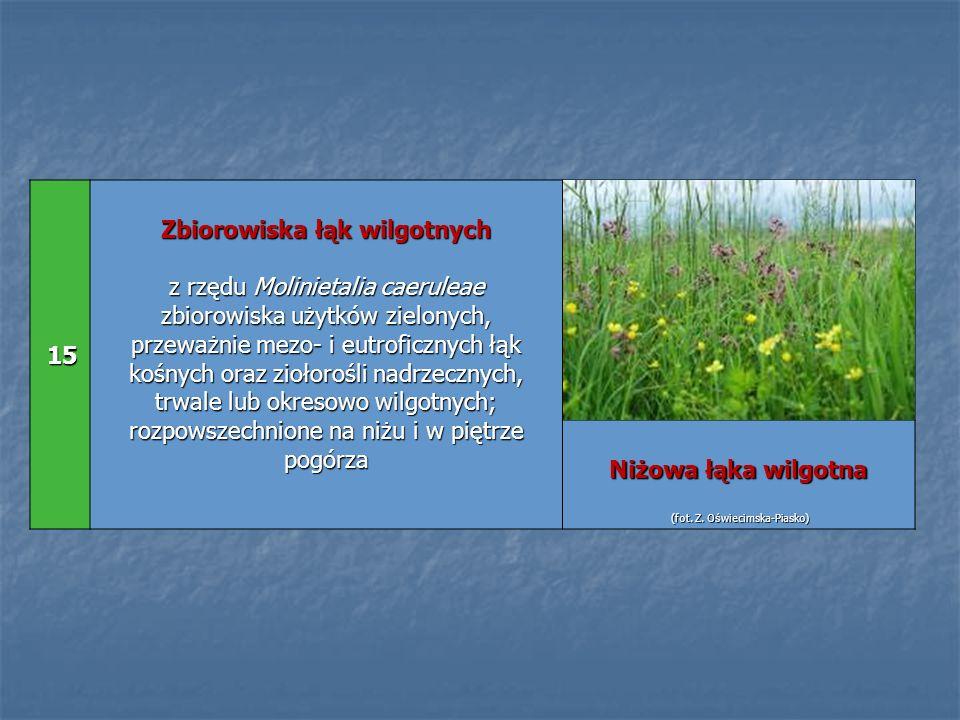 15 15 Zbiorowiska łąk wilgotnych z rzędu Molinietalia caeruleae zbiorowiska użytków zielonych, przeważnie mezo- i eutroficznych łąk kośnych oraz zioło
