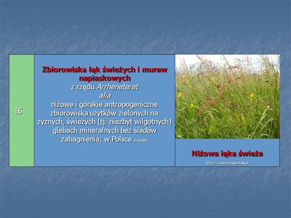 16 Zbiorowiska łąk świeżych i muraw napiaskowych z rzędu Arrheneteret alia niżowe i górskie antropogeniczne zbiorowiska użytków zielonych na żyznych,