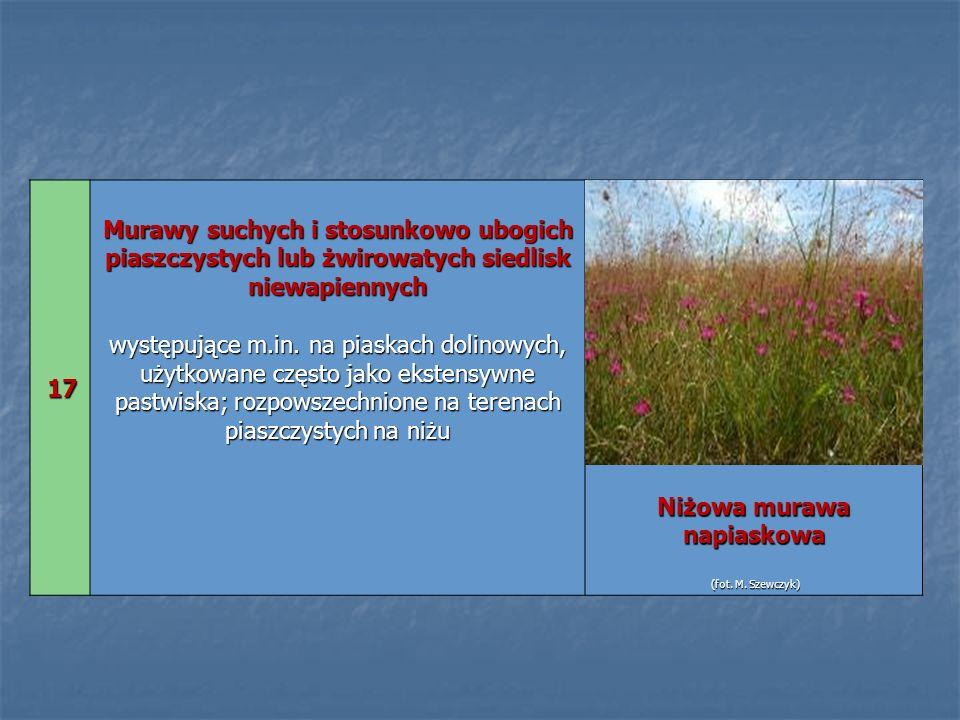 17 17 Murawy suchych i stosunkowo ubogich piaszczystych lub żwirowatych siedlisk niewapiennych występujące m.in. na piaskach dolinowych, użytkowane cz