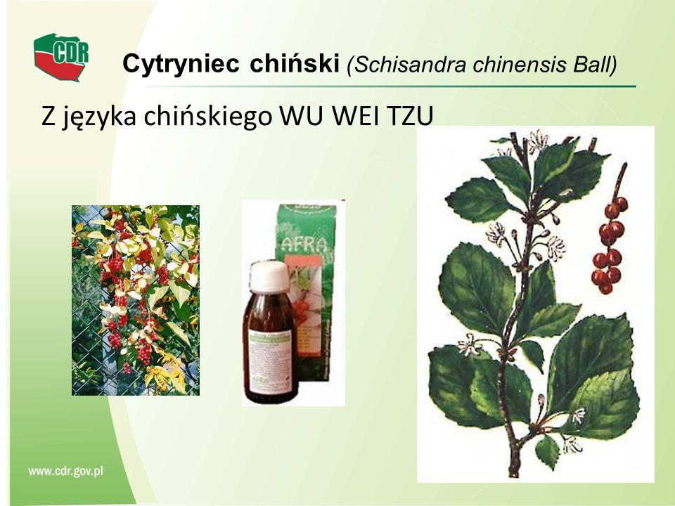 Z języka chińskiego WU WEI TZU Cytryniec chiński (Schisandra chinensis Ball)