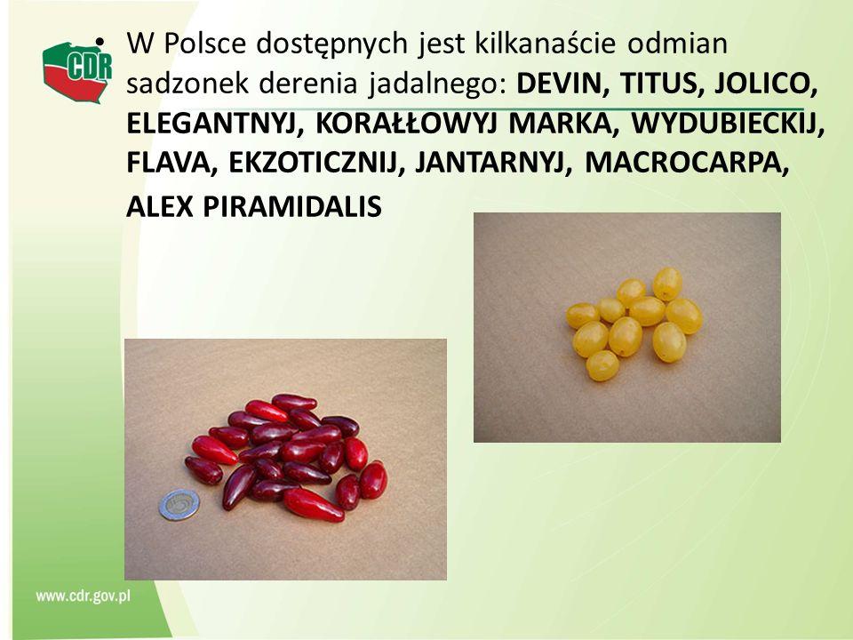 W Polsce dostępnych jest kilkanaście odmian sadzonek derenia jadalnego: DEVIN, TITUS, JOLICO, ELEGANTNYJ, KORAŁŁOWYJ MARKA, WYDUBIECKIJ, FLAVA, EKZOTI
