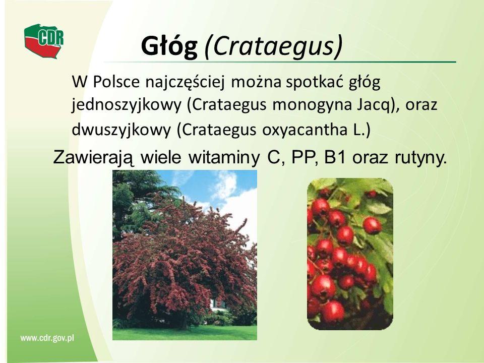 Głóg (Crataegus) W Polsce najczęściej można spotkać głóg jednoszyjkowy (Crataegus monogyna Jacq), oraz dwuszyjkowy (Crataegus oxyacantha L.) Zawierają