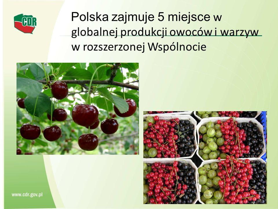 Polska zajmuje 5 miejsce w globalnej produkcji owoców i warzyw w rozszerzonej Wspólnocie