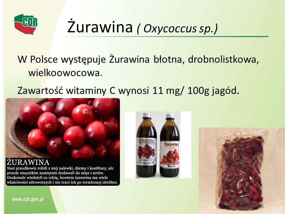 Żurawina ( Oxycoccus sp.) W Polsce występuje Żurawina błotna, drobnolistkowa, wielkoowocowa. Zawartość witaminy C wynosi 11 mg/ 100g jagód.