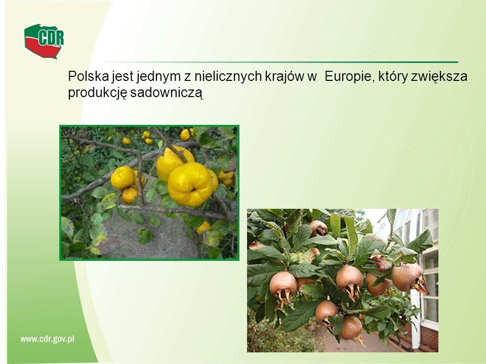 Polska jest jednym z nielicznych krajów w Europie, który zwiększa produkcję sadowniczą