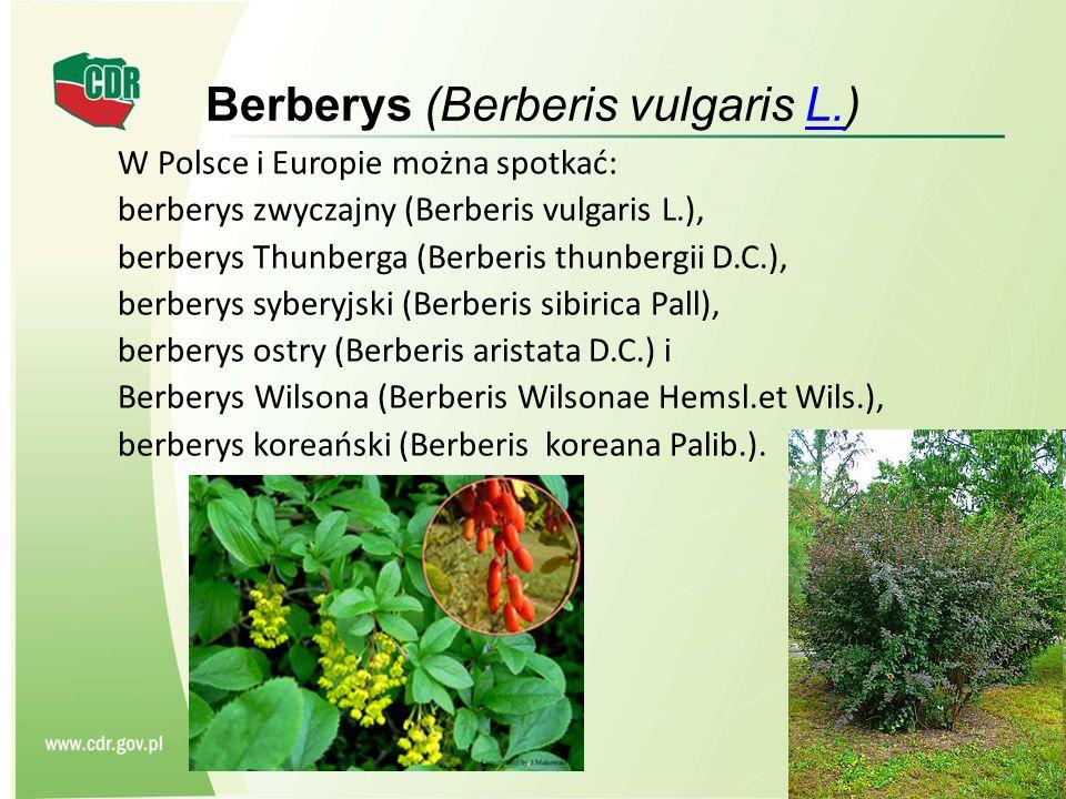 Berberys (Berberis vulgaris L.)L. W Polsce i Europie można spotkać: berberys zwyczajny (Berberis vulgaris L.), berberys Thunberga (Berberis thunbergii