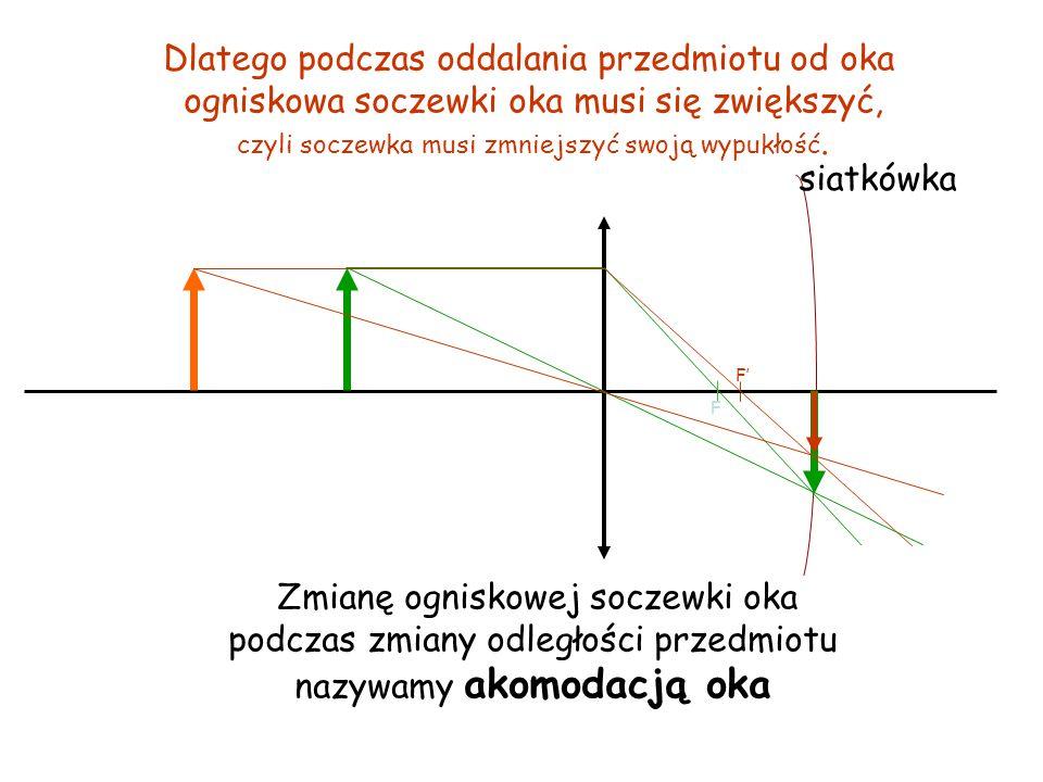 Obraz przedmiotu na siatkówce jest odwrócony, co wynika z wcześniejszych rozważań.