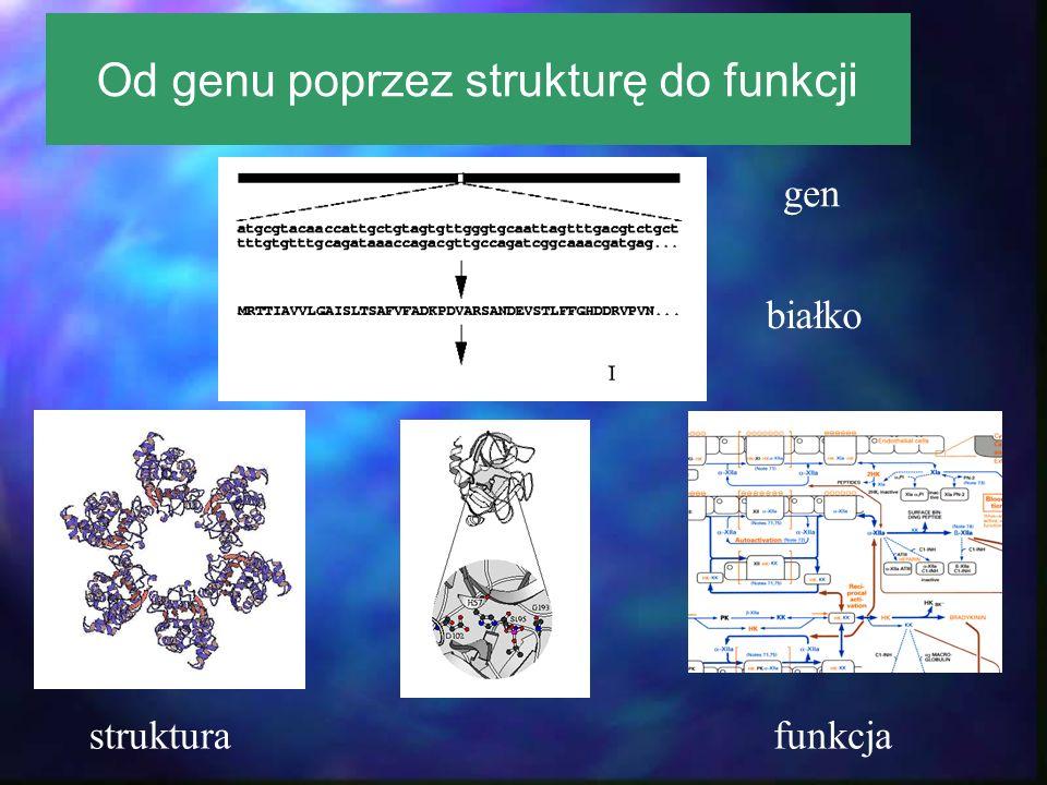 białko strukturafunkcja Od genu poprzez strukturę do funkcji gen