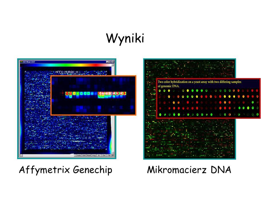 Affymetrix GenechipMikromacierz DNA Wyniki