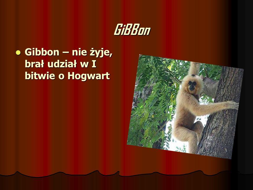 GiBBon Gibbon – nie żyje, brał udział w I bitwie o Hogwart Gibbon – nie żyje, brał udział w I bitwie o Hogwart