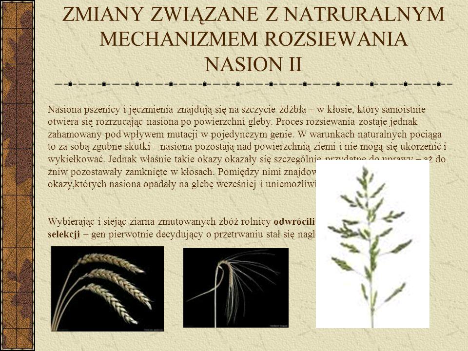ZMIANY ZWIĄZANE Z MECHANIZMEM OPÓŹNIANIA KIEŁKOWANIA Dzikie rośliny w rozmaity sposób zwiększały szanse na wykiełkowanie swoich nasion.