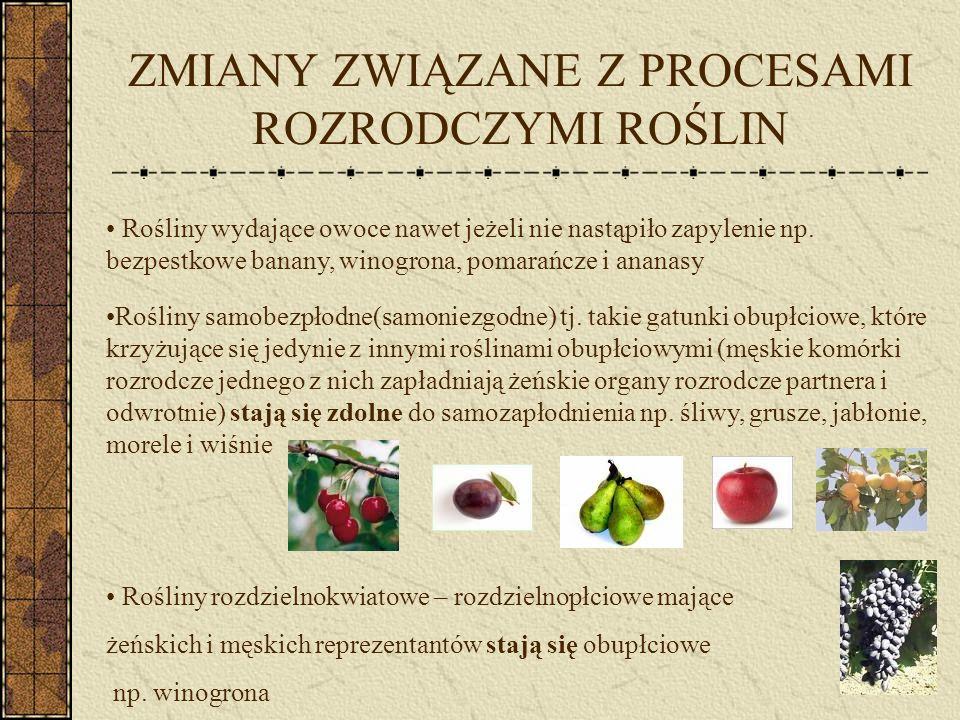 SELEKCJA WIELOKIERUNKOWA ROŚLIN Burak - początkowo hodowany dla smacznych liści (burak liściowy, boćwina) - następnie wyhodowano rośliny mające jadalne korzenie (burak ćwikłowy) - w XVIII w.