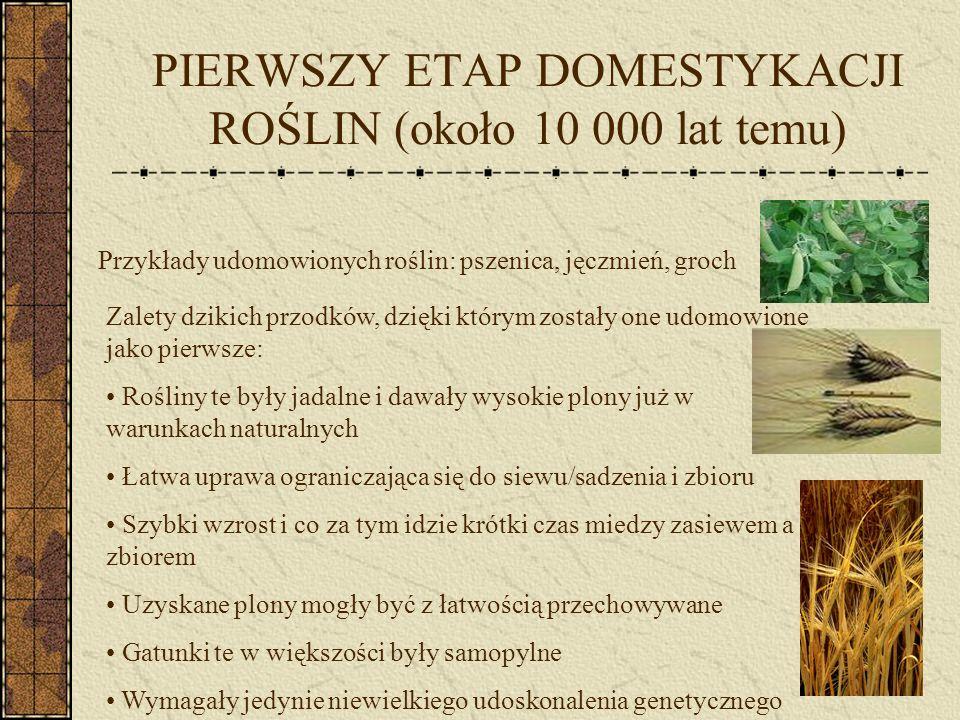 DRUGI ETAP DOMESTYKACJI ROŚLIN (około 4 000 p.n.e.) Przykłady udomowionych roślin: oliwki, figi, daktylowce, granaty, winorośl Trudności w udomowieniu: - drzewa zaczynały owocować nie wcześniej niż 3 lata po zasadzeniu, największe zbiory uzyskiwało się po 10 latach – wymagały w pełni osiadłego trybu życia Zalety: - możliwość odnawiania z sadzonek lub nasion - zaleta sadzonkowania: kiedy wyhodujemy jedno plenne drzewo wszystkie osobniki potomne będą identyczne