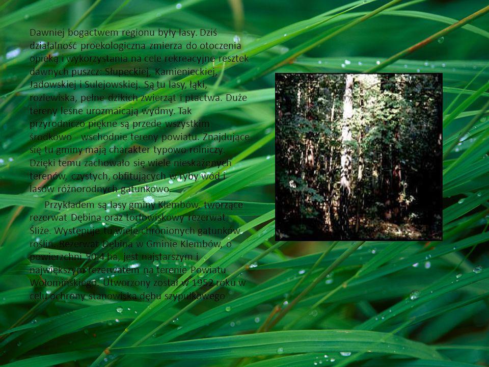 Dawniej bogactwem regionu były lasy. Dziś działalność proekologiczna zmierza do otoczenia opieką i wykorzystania na cele rekreacyjne resztek dawnych p
