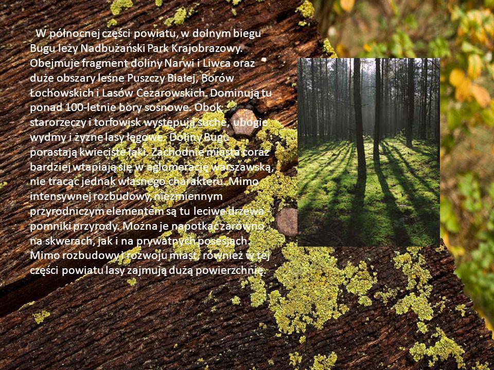 W północnej części powiatu, w dolnym biegu Bugu leży Nadbużański Park Krajobrazowy. Obejmuje fragment doliny Narwi i Liwca oraz duże obszary leśne Pus