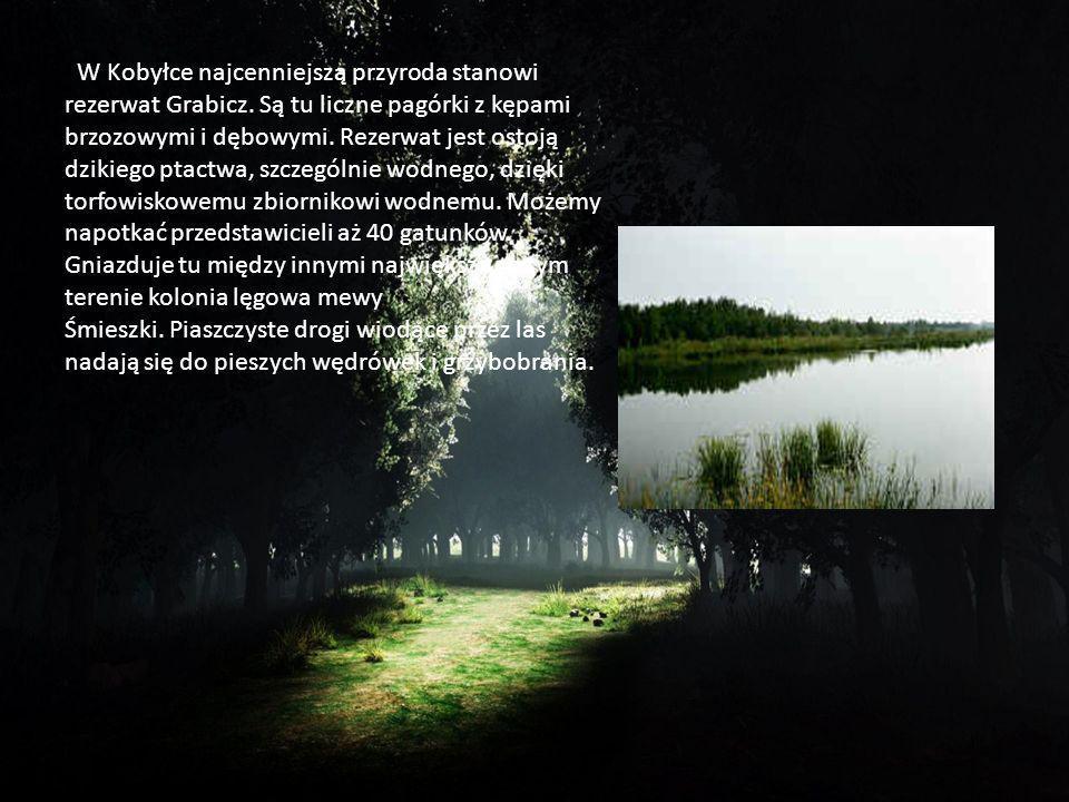 W Kobyłce najcenniejszą przyroda stanowi rezerwat Grabicz. Są tu liczne pagórki z kępami brzozowymi i dębowymi. Rezerwat jest ostoją dzikiego ptactwa,