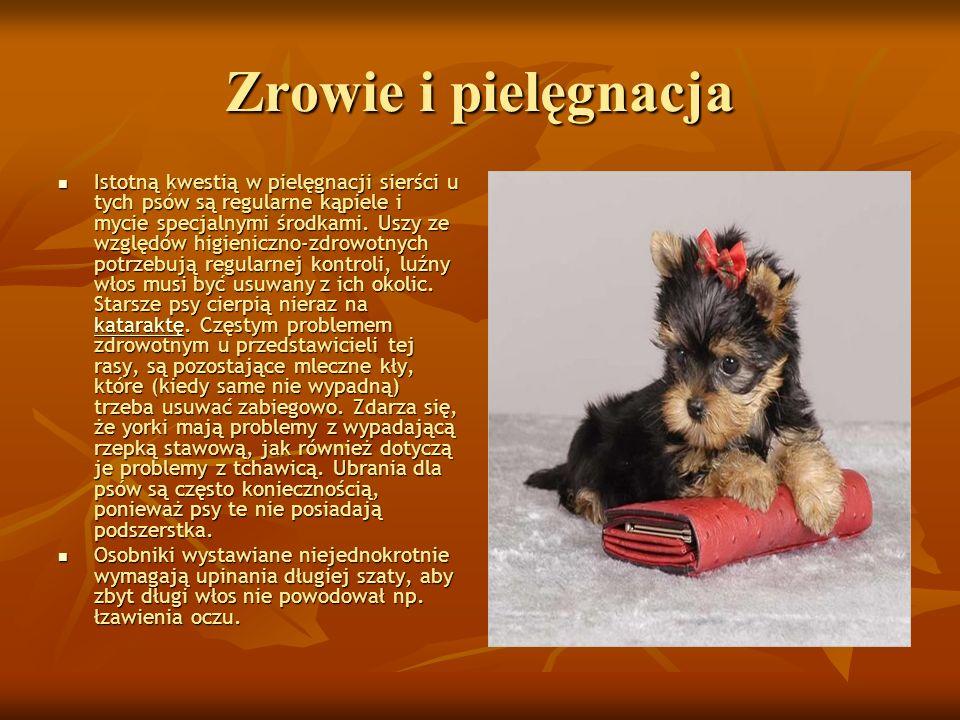 Użytkowność Psy tej rasy to głównie psy towarzyszące i reprezentacyjne.