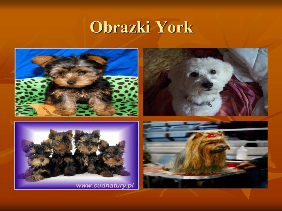Obrazki York
