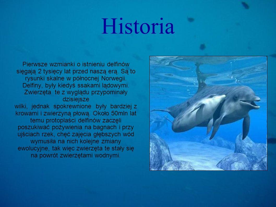 Historia Pierwsze wzmianki o istnieniu delfinów sięgają 2 tysięcy lat przed naszą erą. Są to rysunki skalne w północnej Norwegii. Delfiny, były kiedyś