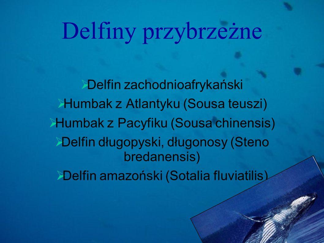 Delfiny przybrzeżne Delfin zachodnioafrykański Humbak z Atlantyku (Sousa teuszi) Humbak z Pacyfiku (Sousa chinensis) Delfin długopyski, długonosy (Ste