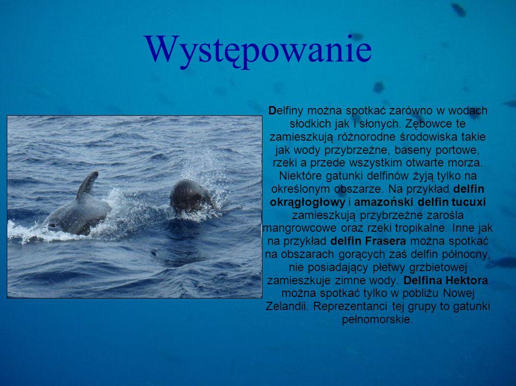 Występowanie Delfiny można spotkać zarówno w wodach słodkich jak i słonych. Zębowce te zamieszkują różnorodne środowiska takie jak wody przybrzeżne, b