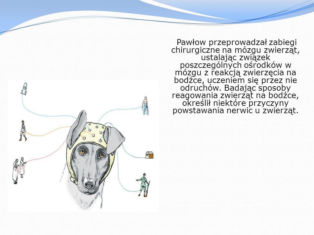 Pawłow przeprowadzał zabiegi chirurgiczne na mózgu zwierząt, ustalając związek poszczególnych ośrodków w mózgu z reakcją zwierzęcia na bodźce, uczenie