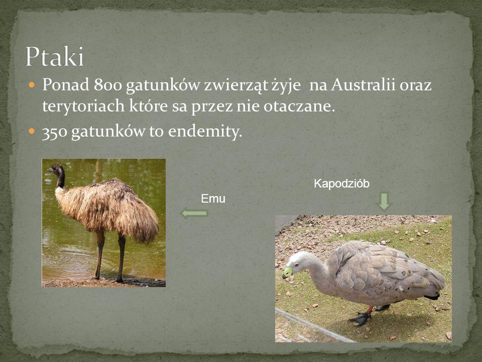 Ponad 800 gatunków zwierząt żyje na Australii oraz terytoriach które sa przez nie otaczane. 350 gatunków to endemity. Kapodziób Emu