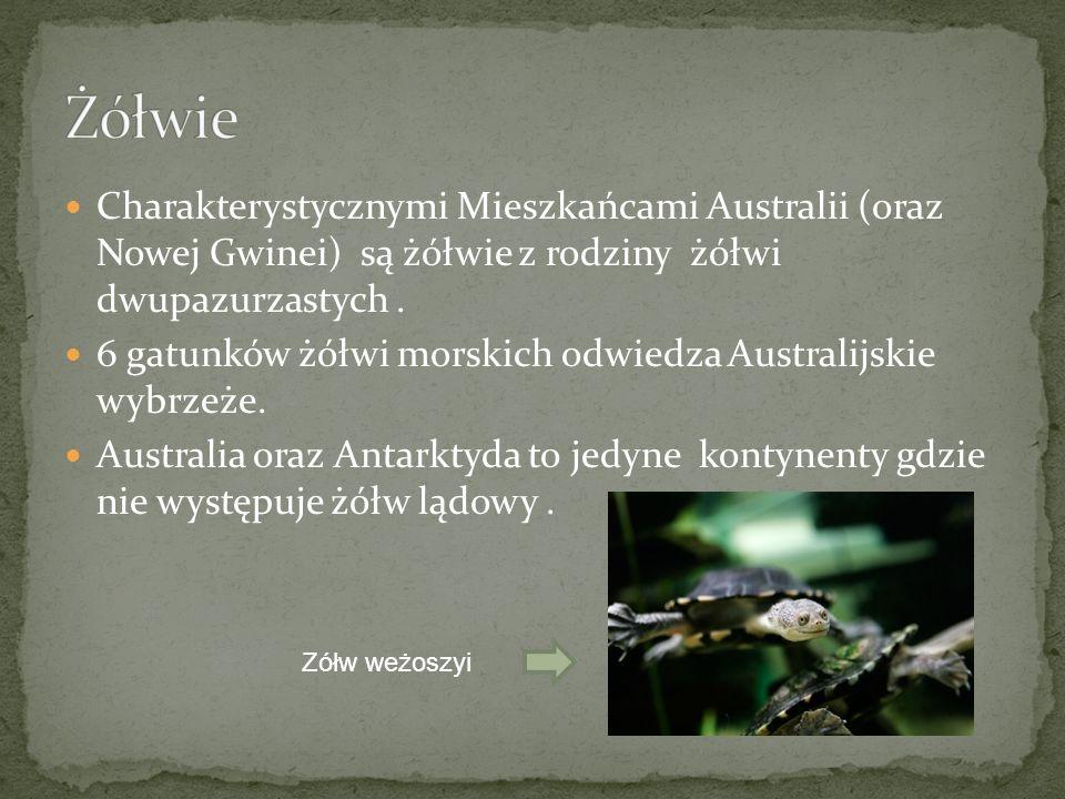 Charakterystycznymi Mieszkańcami Australii (oraz Nowej Gwinei) są żółwie z rodziny żółwi dwupazurzastych. 6 gatunków żółwi morskich odwiedza Australij