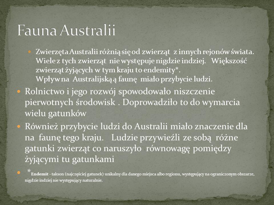 Zwierzęta Australii różnią się od zwierząt z innych rejonów świata. Wiele z tych zwierząt nie występuje nigdzie indziej. Większość zwierząt żyjących w