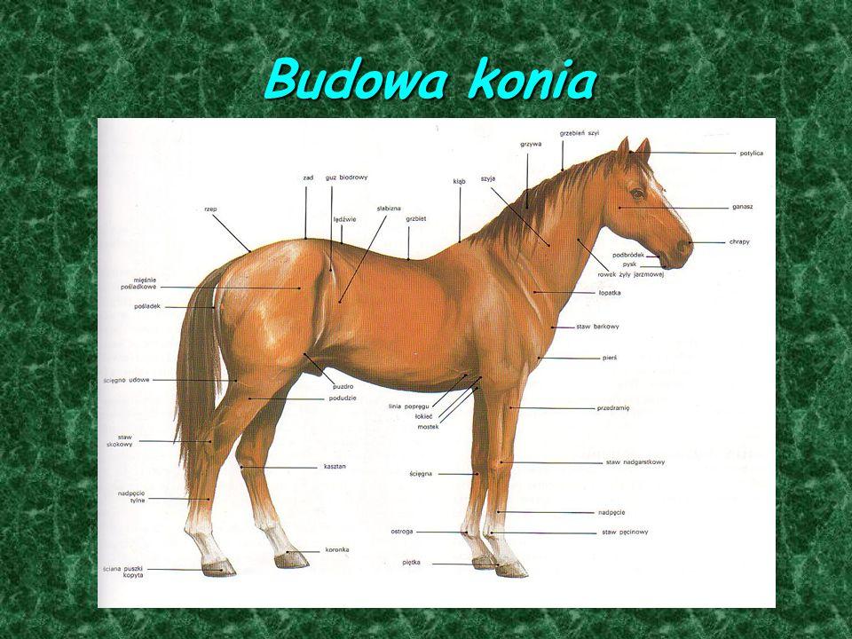 Konie jako hobby Jazda konna to wspaniały rodzaj relaksu, wypoczynku, a także wymagająca próba własnej kondycji.