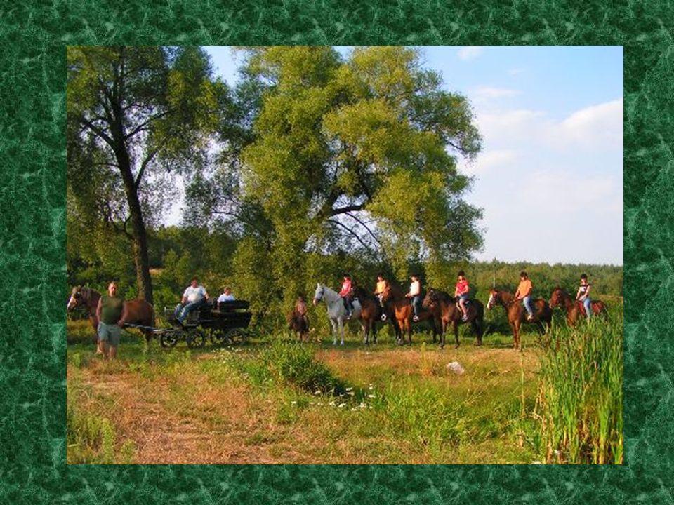 Konik jako lek Jazda konna w dzikiej przyrodzie lub na terenie do jazdy przynosi maksymalny relaks i wypoczynek.