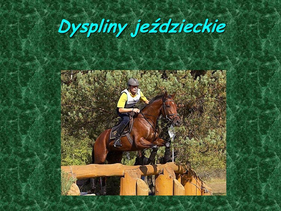 Dyspliny jeździeckie