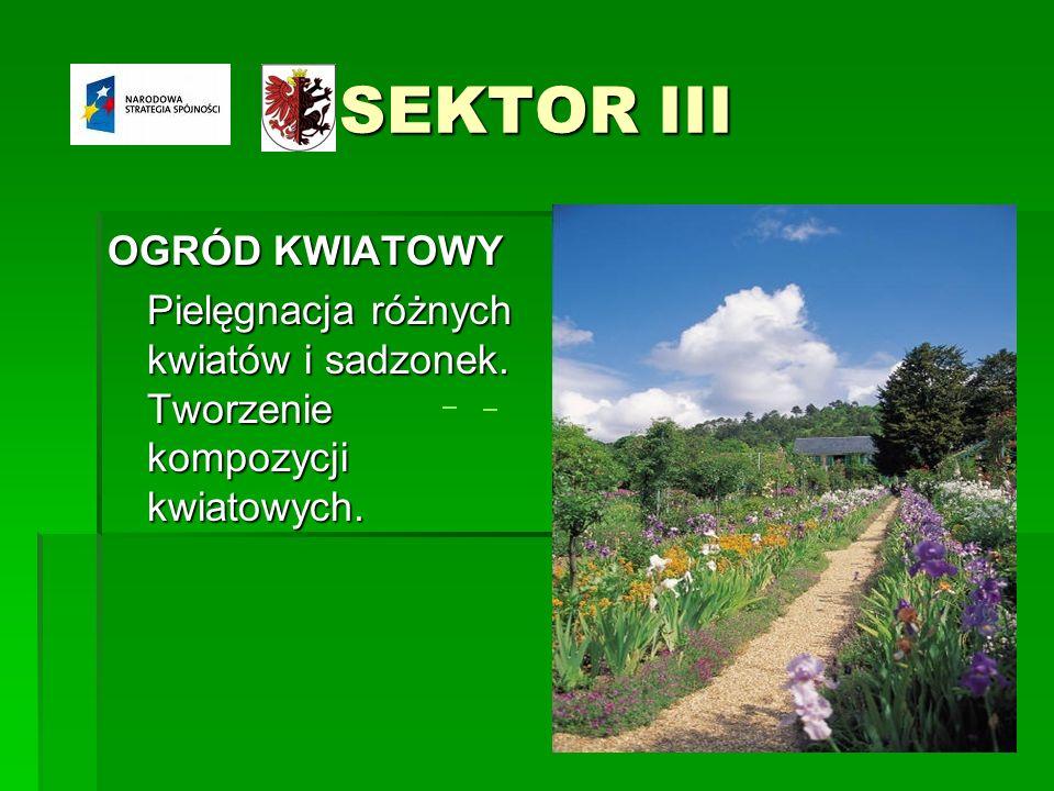 SEKTOR III OGRÓD KWIATOWY Pielęgnacja różnych kwiatów i sadzonek. Tworzenie kompozycji kwiatowych.